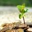 معرفی برترین صندوق های سرمایه گذاری در فروردین ماه