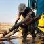 ماجرای بازار نفت در هفته های اخیر و افق بازار
