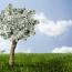 پیش لرزه های کاهش سود بانکی در صندوق های سرمایه گذاری
