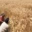 در اولین روز آبانماه صورت میگیرد؛ عرضه ۴۰۰ هزار تن گندم خوراکی و آرد گندم در بورس کالا