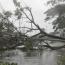 دلیل قطعی برق پرتعداد در کشور اعلام شد؛ درختانی که روی سیمها میافتند