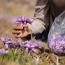 از دوم دی ماه؛ زعفران رشته ای را برای تحویل بهمن ماه معامله کنید