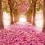 شعری از حضرت مولانا به مناسبت فرار رسیدن فصل بهار