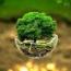 کار زیبای یک بانک در جهت حمایت از محیط زیست