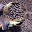 چادرملو به پهنه معدنی ٢ میلیارد تنی دسترسی پیدا می کند...