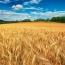 کالای کشاورزی پربازدهترین بخش بازار سرمایه کشور