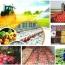 نقش مهم بورس کالا در طرح تقویت امنیت غذایی کشور